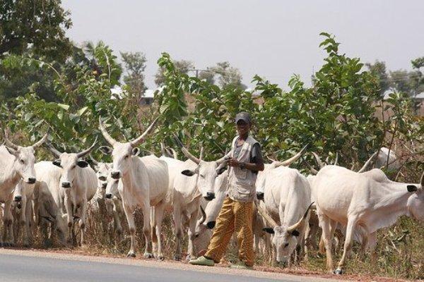 Nasarawa LGA warns herdsmen to stay off farmland