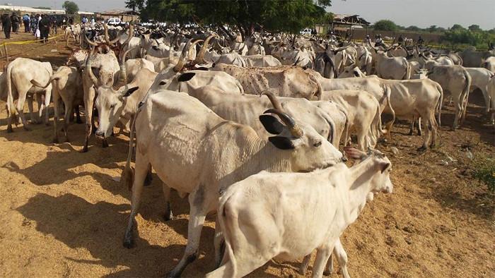 Illustration: Cattle dealers