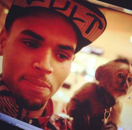 Singer Chris Brown with his monkey